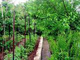 Земельный участок 11 соток (СНТ, ДНП)